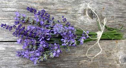 Lavendelblüten zum Räuchern