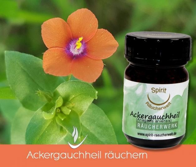 Ackergauchheil - heimisches Räucherwerk