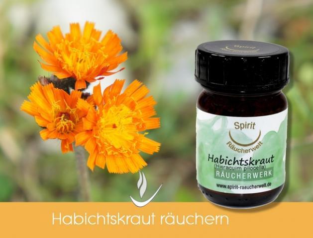 Habichtskraut - heimisches Räucherwerk