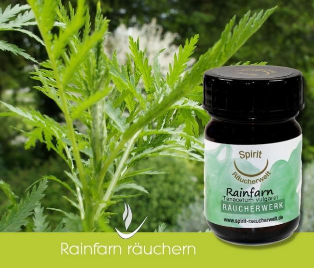 Rainfarn bio - heimisches Räucherwerk