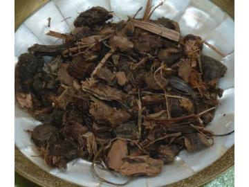 Nussgras/Nagarmothawurzel zum Räuchern