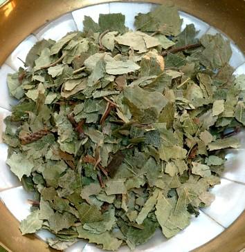 Birkenblätter zum Räuchern