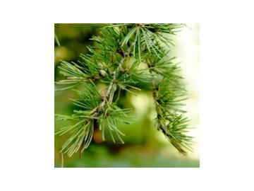 Zedernholz (Juniperus virginiana) äth. Öl 10ml