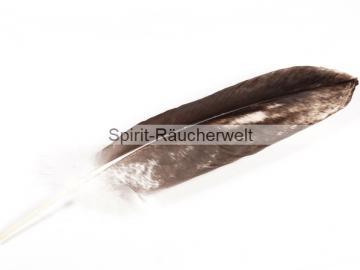 Adlerfeder | europäischer Seeadler - Räucherfeder mit Cites
